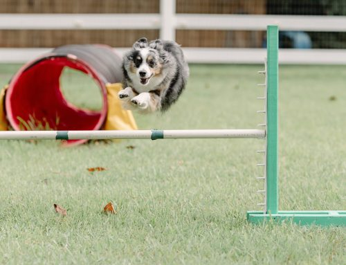 At the Houston Dog Ranch, Dogs Are the VIPs