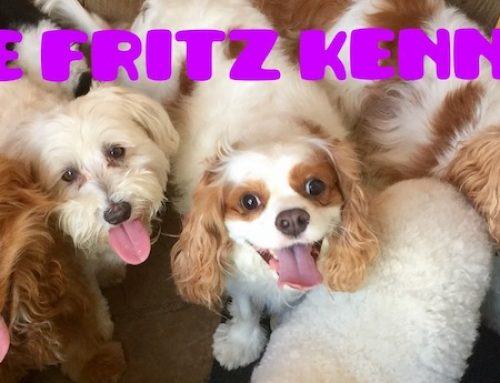 The Fritz Kennel: Dedicated to Spring Branch and Its Pets